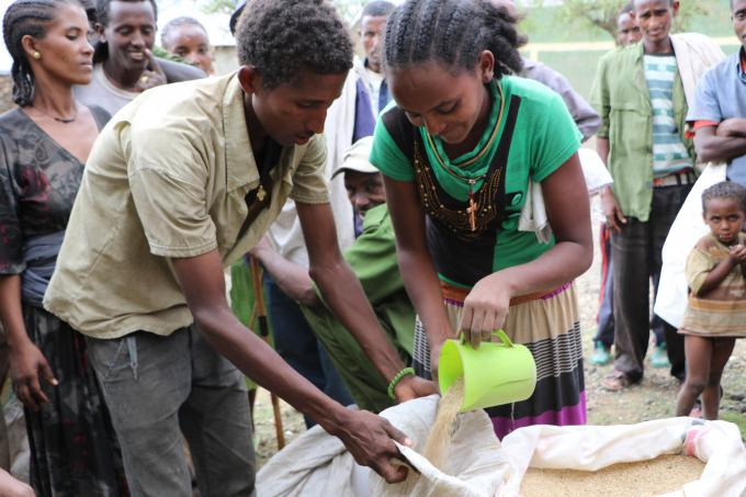 Wondimu Assefa, 28, receiving Sesame seed for the Meher season from Save the Children, July 2016